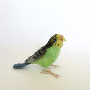セキセイインコ(緑)