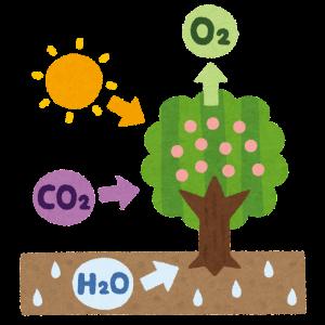 【コスパ最高】水草を元気に育成。水槽のCO2添加に化学反応式CO2がおすすめ!