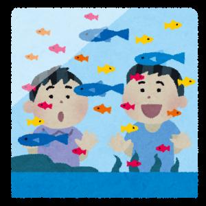我が家のお魚紹介【アクアリウム】
