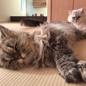 【猫が大好き】愛しの猫ちゃんのためのグッズを集めてみました!【犬も大好き】