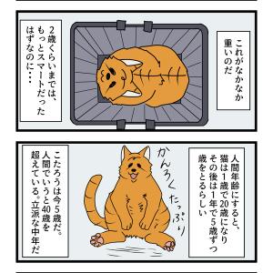 第38話 猫漫画 追い越してゆく