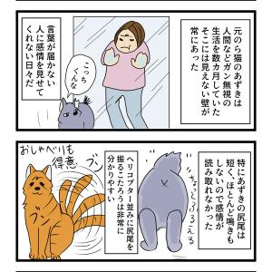 第41話 猫漫画 あずきの変化