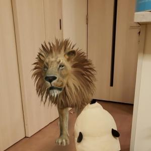 Animal cro__ing? -3-