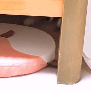 佐吉、ベッドの下にハマる!の巻