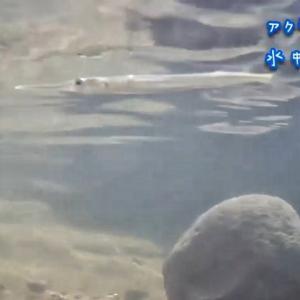 インドの内陸にも水が澄んだ川はあります 【インドVLOG】