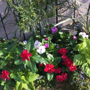 お庭で育てたお花