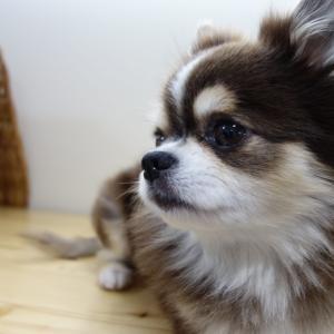 【犬の管理栄養士監修】犬にそら豆はOK?与えるときの注意点やレシピ
