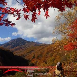 八ヶ岳南麓わんこと紅葉ドライブ