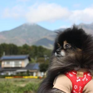 八ヶ岳南麓 犬連れペットとお得情報