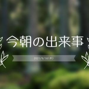 えひめAI-1を株元に撒き、葉面散布も!!!黒点病の葉が取り除いた!ハゲちゃびん!!!(2021年9月16日朝)
