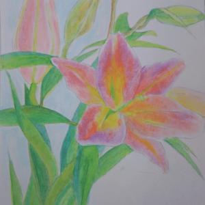 ユリの花の水彩画