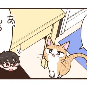 ごはんの時間に呼びに来る猫【にゃん太】
