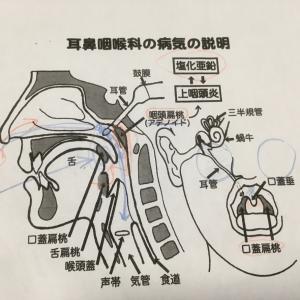 耳鼻咽喉科へ GO…