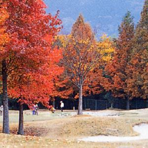 彦根カントリー倶楽部 琵琶湖の見えるゴルフ場