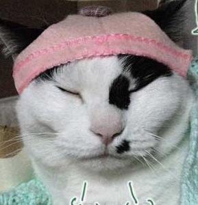 帽子猫にゃ~♪どか~っと猫帽子作った感想と画像♪収納~じゃ