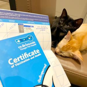 猫のワクチン接種、1回目