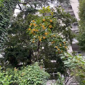20210926日記 渋谷ふれあい植物園