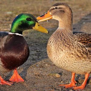 怪しいと噂の鴨頭嘉人に学んだ事。田舎移住が成功したのは鴨頭のおかげ?