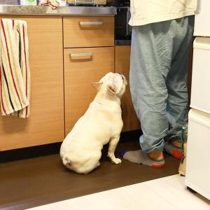要求するときの犬の距離感が近すぎて好き