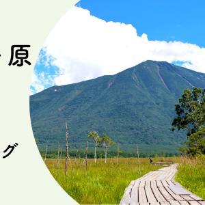 【奥日光 戦場ヶ原】真夏のハイキング