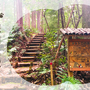トトロの舞台・狭山丘陵「トトロの森」をお散歩しよう!アクセスや散策コースの見どころをご紹介