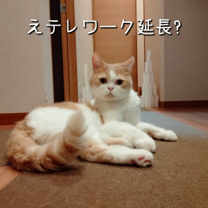 雨田甘夏、下手くそです。【猫と撮影と動画事情】