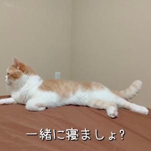 雨田甘夏、人肌です。【猫と晩夏と初秋事情】