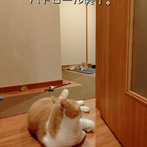 雨田甘夏、暴力です。【猫とねこパンチとぶっつぶし事情】