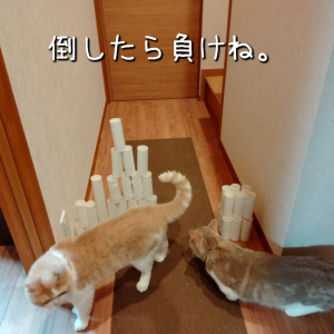雨田甘夏、11代目です。【猫とネズミ色のねずみさん事情】