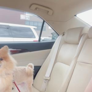 愛犬を連れてホームセンターへ♪