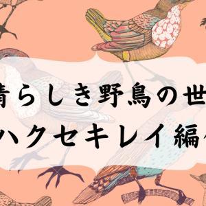 【写真館】素晴らしき野鳥の世界~ハクセキレイ編~