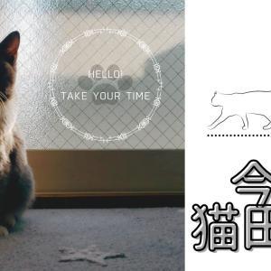 【今日の猫田くん】おすすめのキャットフードについて考える その1