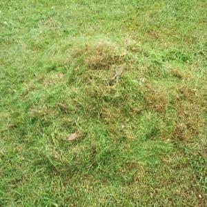 芝生の庭でゴルフ練習!