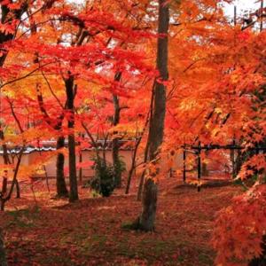 【海外の反応】「日本の秋は神の自然だ」日本の紅葉の風景。