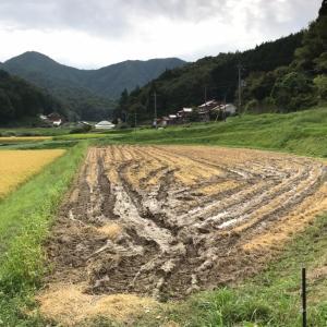 秋の田んぼ作業は辛いのね。実家の田んぼで経験したこと。