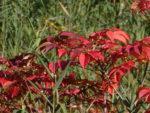 殺生河原 武具脱の池周辺 紅葉の様子 2021年9月19日