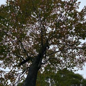 有吉弘行氏、三浦春馬氏へのメッセージ、記者会見、まずは「木下(ちょりーす)から」No.390