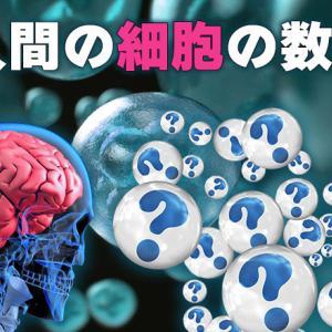 人間の細胞の数はどのぐらいあるの?