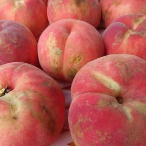 雨の影響で、泣けてくる桃っこ収穫