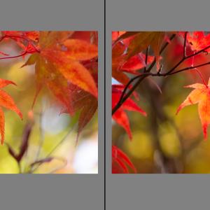 2021/9/18 紅葉の写真(提出済み・審査済み)