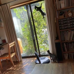 網戸を登る猫(黒猫バージョン)