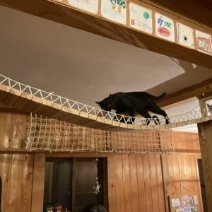 つり橋を渡る猫