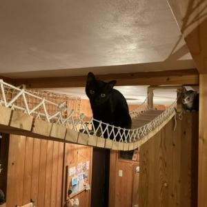 つり橋を渡れない猫