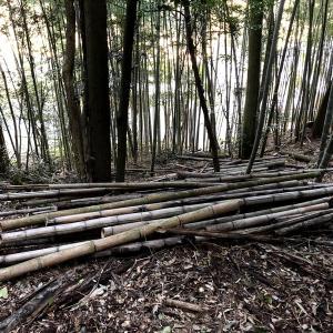 竹の焚き付け作り