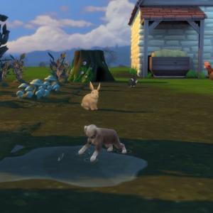 大農場レガシーチャレンジ(22)思ってた牧羊犬と違う