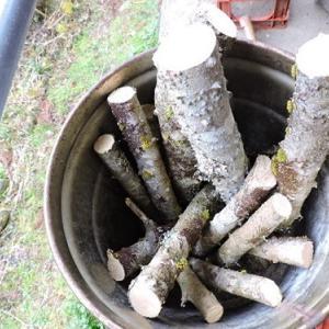 山椒のすりこ木を作る