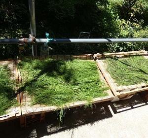 野草茶作りや伐採作業