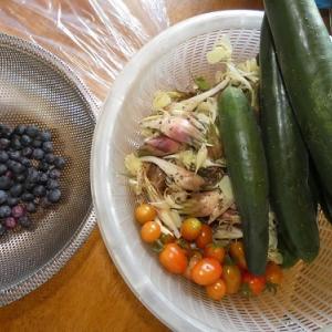 ミョウガご飯と簡単シバ漬け