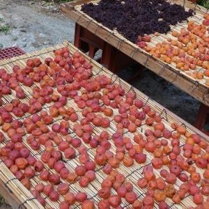 梅の土用干し&新生姜を漬ける