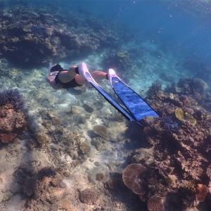【沖縄・石垣島】海のなかでタートルと遭遇!「FAUSTO」の半日フリーダイビング【旅するように暮らす】